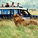 African Safari party theme - thumbnail image